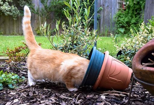 terrasse-chat-plante