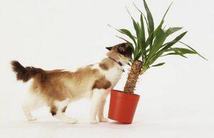Terrasse : comment choisir des plantes sans danger pour son animal de compagnie