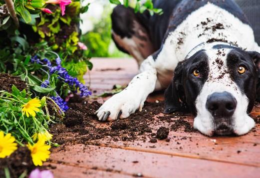 chien-plante-terrasse
