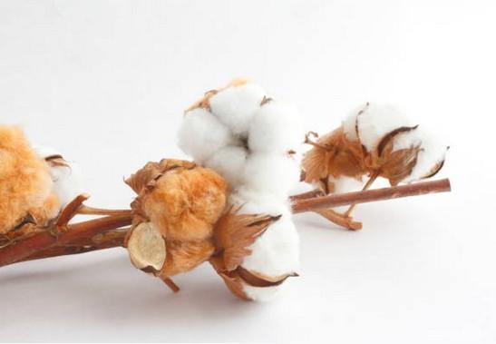 coton-bio-tissu