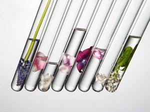 3 ingrédients d'origine naturelle souvent utilisés dans les produits cosmétiques