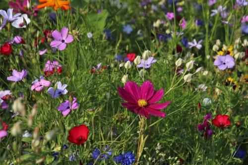 Insolite : les effets incroyables des plantes curatives ou mortelles